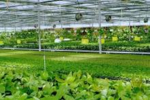 蔬菜生产智能化控制系统