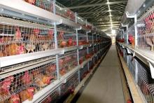 物联网智慧养鸡场系统