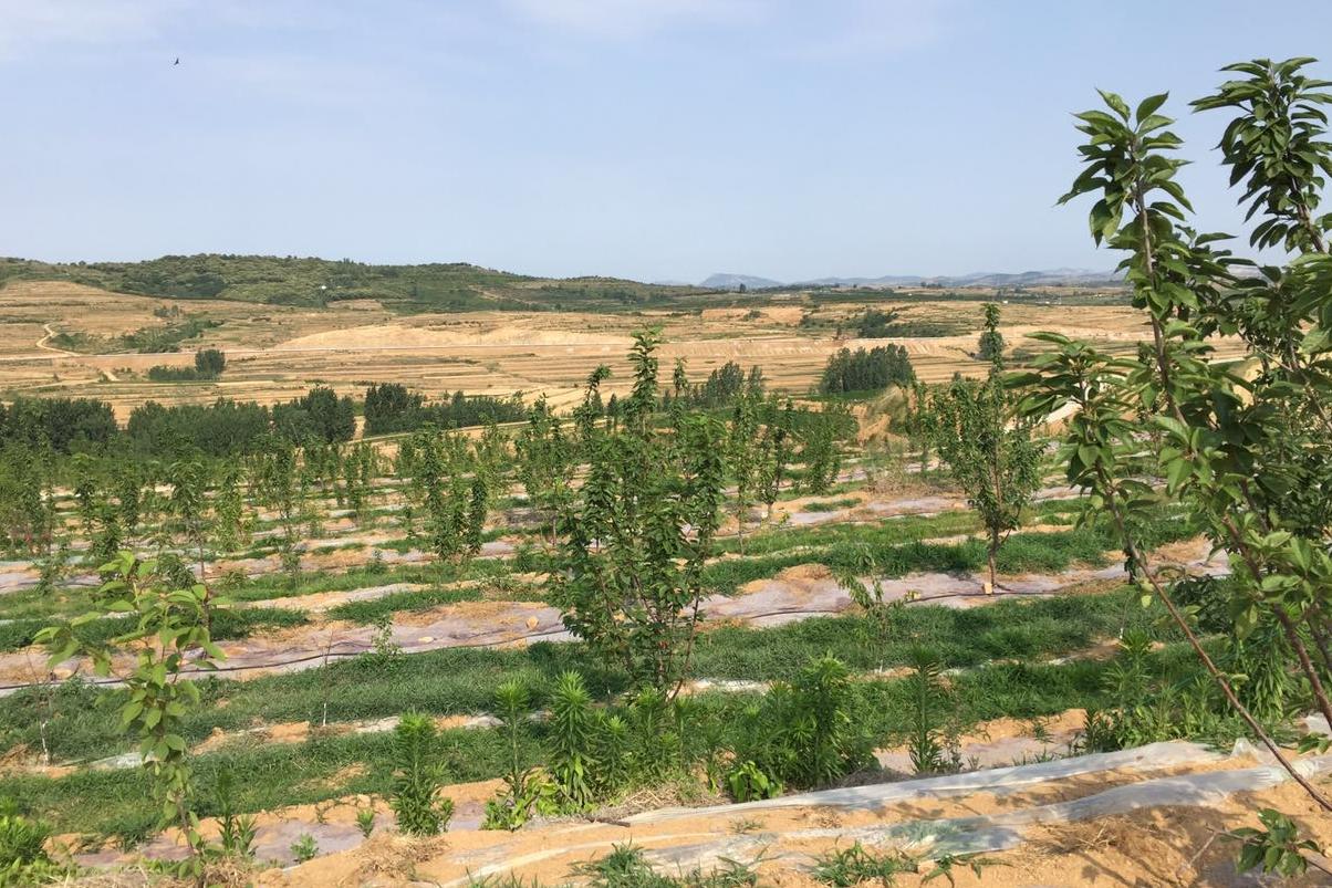 山东樱桃树小管出流+水肥一体化施肥机项目