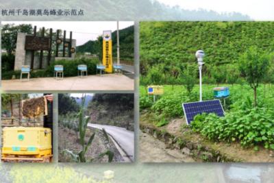 杭州千岛湖莫岛蜂业示范点